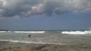 Playa Langosta con Surfistas